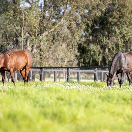RWWA Presents Multi-purpose Racehorse Welfare Facility thumbnail