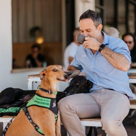 Greyhounds as Pets WA Announces Adoption Month thumbnail